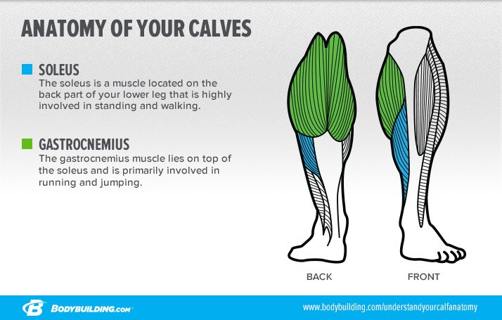 6 Lessons That Will Transform Your Calves