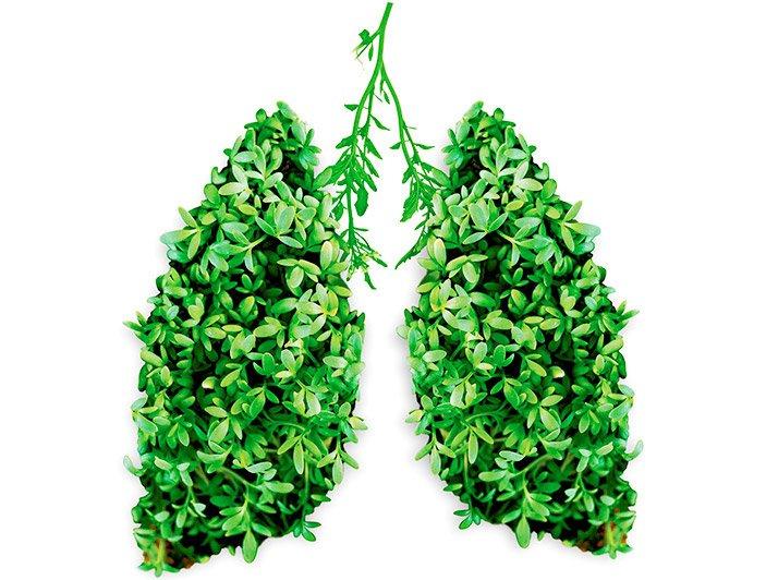 http://www.infoduniakesehatan.com/2016/06/makanan-untuk-paru-paru.html