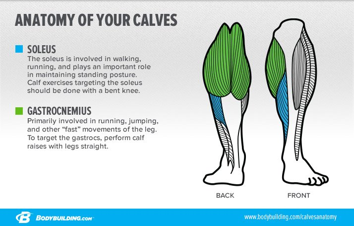 Calf muscle growth running