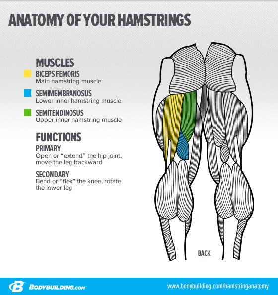 8 Ways To Build Bigger And Stronger Hamstrings