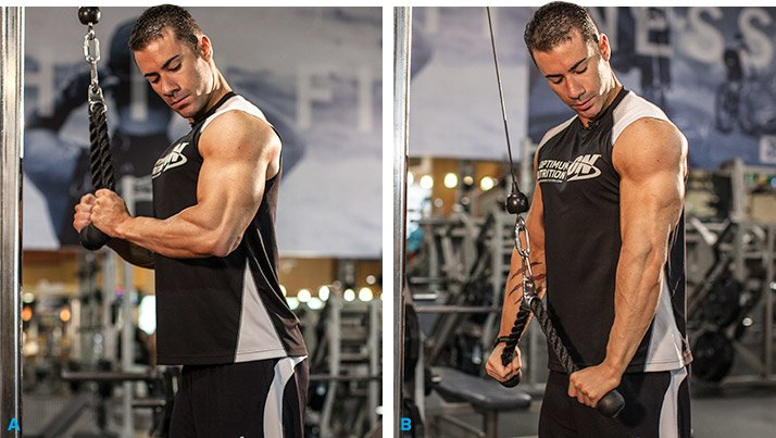 Arms By Alex Strong Biceps And Triceps Workout
