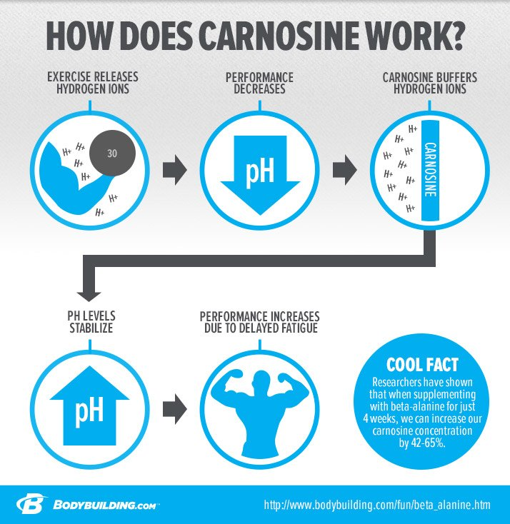 Image result for Role of Carnosine as a Muscle Cell Buffer