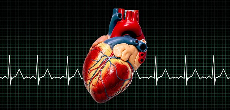 Your Heart: The Muscle That Matters The Most