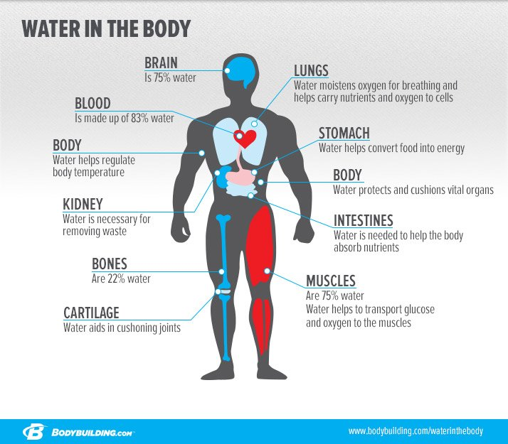 the importance of proper nutrition for the health of the human body Electrolytes are minerals in your body that have an electric charge they are in your blood, urine, tissues, and other body fluids electrolytes are important because they help.