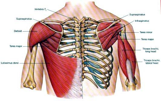 how to build the teres major muscle