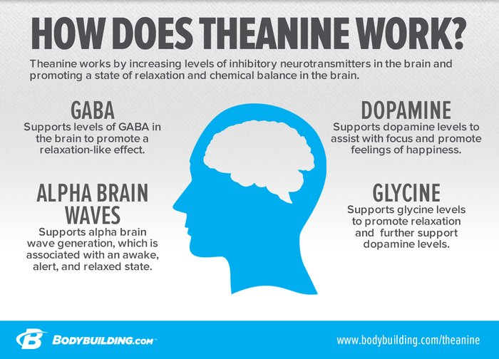 Think Theanine For Brain Gains!