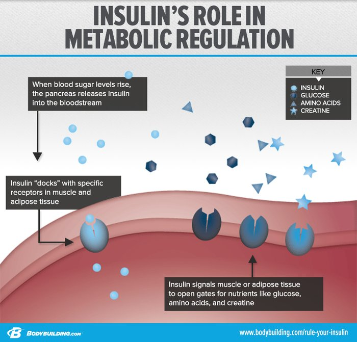The Muscle-Building Messenger: Your Complete Guide To Insulin