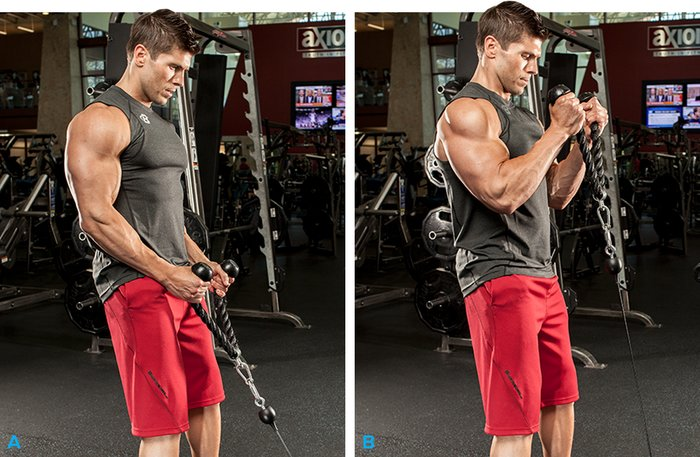 Best Bicep Routine Workout S Fitness Exercises