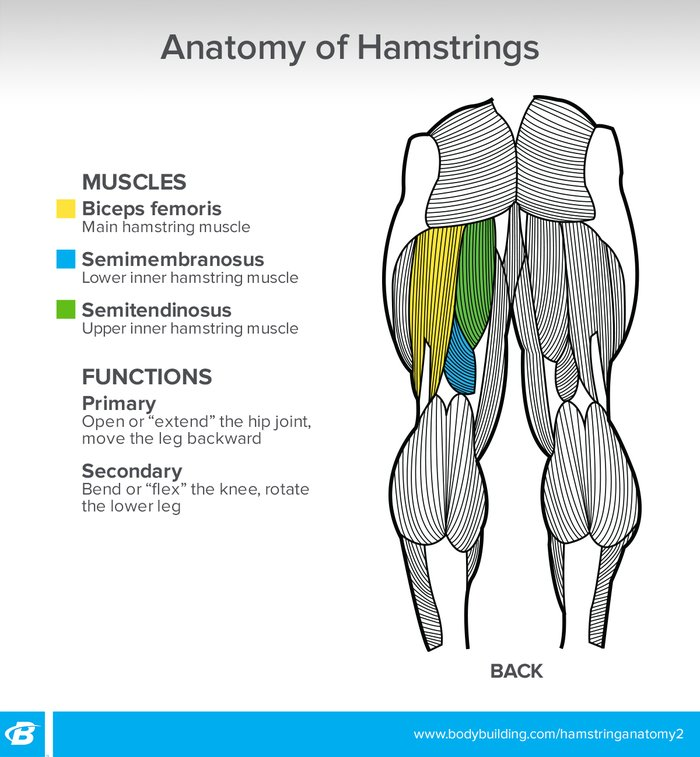 The Other Curl Get The Most Out Of Your Hamstring Training