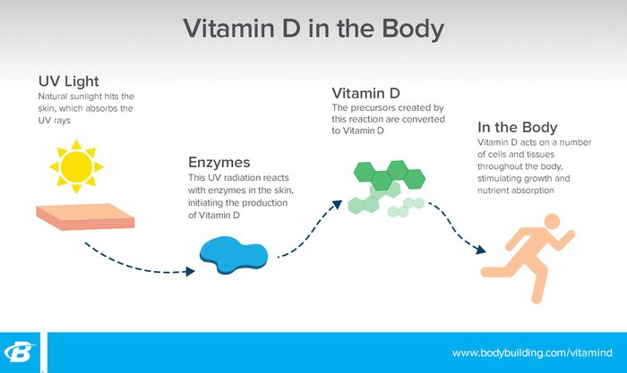 Your Expert Guide To Vitamin D Bodybuilding Com