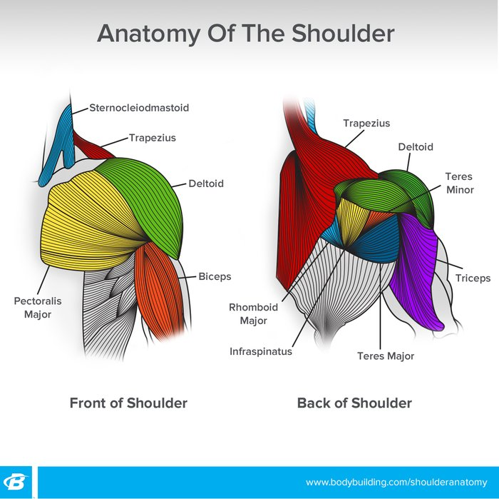 Shoulder Workouts For Women 4 Workouts To Build Size And Shape
