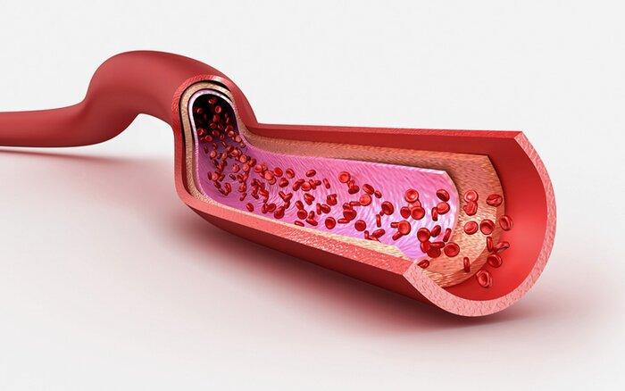 Image of blood vessels