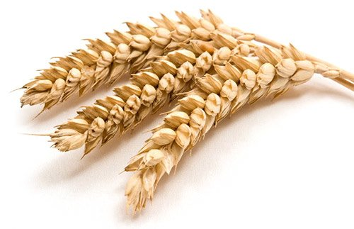 All you need to know about gluten intolerance and celiac disease