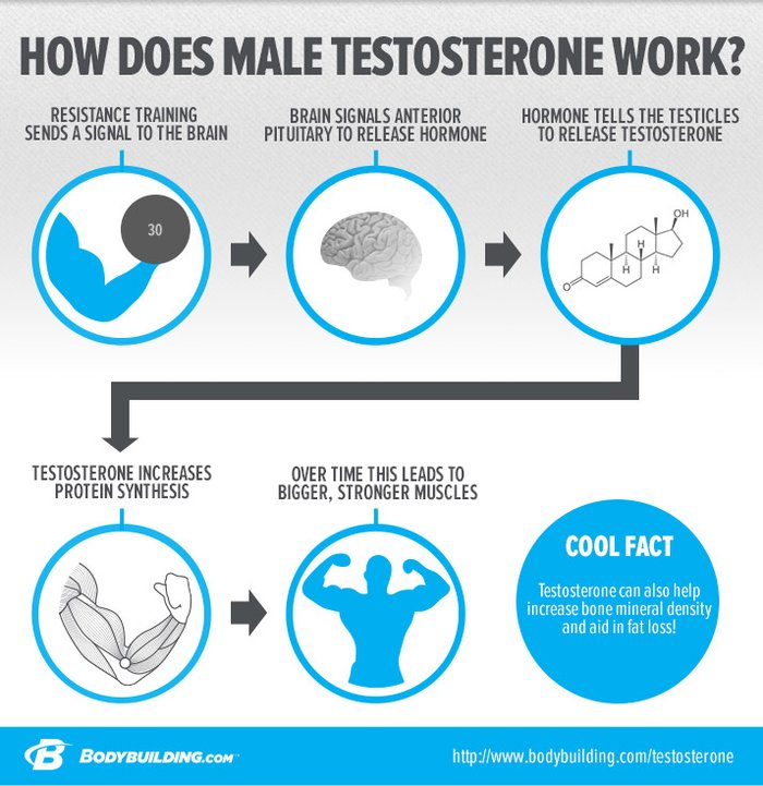 how towards rise my testosterone naturally