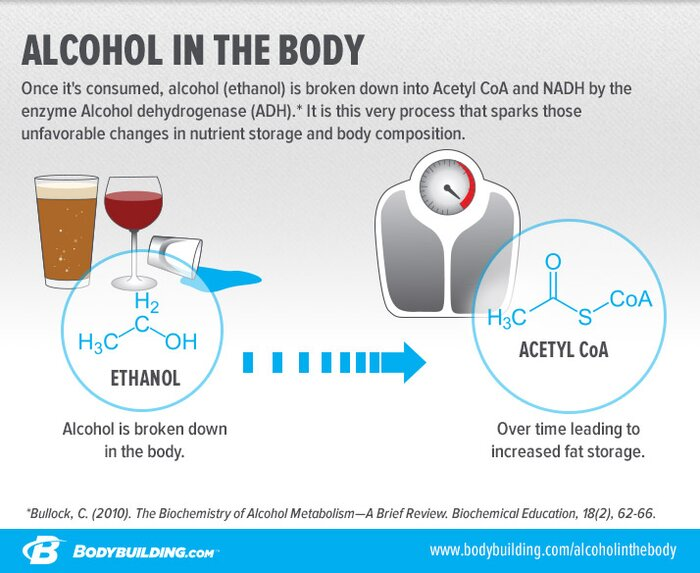 Alcohol in the Body infographic
