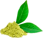 Green Matcha Leaf