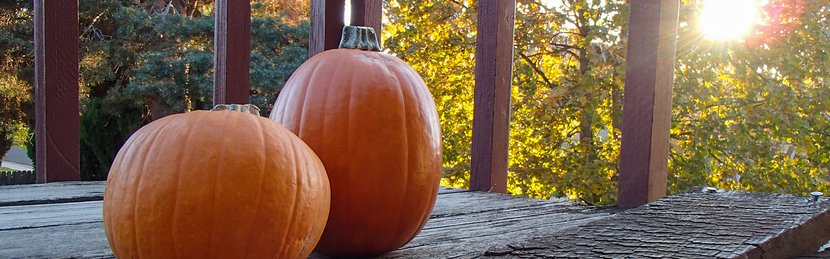 The Power Of Pumpkin: 6 Surprising Health Benefits